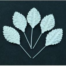 Лист шелковицы белый -40мм (50шт.)