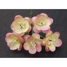 Цветок вишни, шампанское с розовым - 25мм (50шт.)