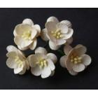 Цветок вишни, темная слоновая кость - 25мм (50шт.)