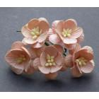 Цветок вишни, персиковый - 25мм (50шт.)