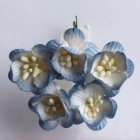 Цветок вишни, бело-голубой - 25мм (50шт.)