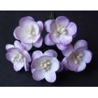 Цветок вишни, бело-лиловый - 25мм (50шт.)