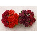 Роза коттеджная, красные тона - 25мм (20шт.)