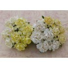 Роза коттеджная, тон бело-желтый – 30мм (20шт.)