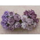 Роза коттеджная, тон пурпурно-лиловый - 30мм (20шт.)