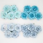Роза шпалерная,  голубые тона – 35мм (20шт.)