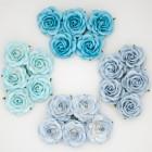 Роза шпалерная,  голубые тона – 40мм (20шт.)