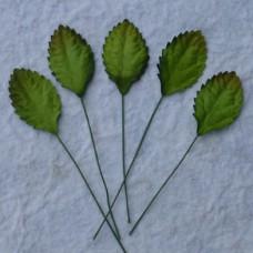 Лист шелковицы зеленый -30мм (100шт.)