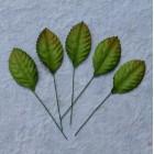 Лист шелковицы зеленый -35мм (100шт.)