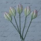 Лист шелковицы бело-зеленый - 25мм (100шт.)