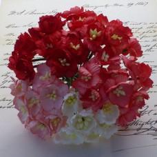 Цветок вишни, красный/белый микс - 25мм (50шт.)