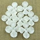 Цв. Гортензии плоские белые – 25мм (100шт.)