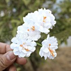 Тканевые цветочки белые